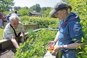 Gerhard Vollbrecht und Suzanne Muschner arbeiten im Hochbeet