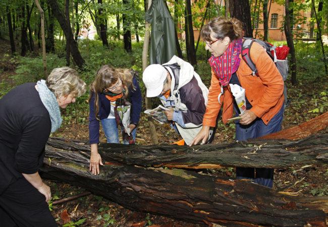 """""""Land Art"""" verbindet Menschen, Natur und Kunst"""