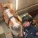Pferdefreunde machen Reitabzeichen